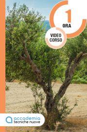 La potatura dell'olivo a vaso policonico