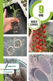 Microrganismi: la svolta sostenibile della nuova agricoltura